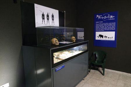 Museo del Paleolítico